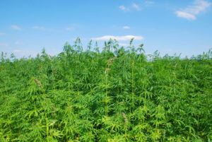 Creative Nature Shelled Hemp should go above map